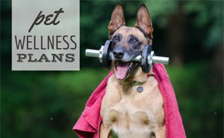 Dog with barbell in mouth (caption: Pet Wellness Plans)