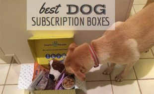 Best Dog Subscription Box