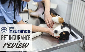 Dog at vet on back (Caption: Petco Pet Insurance Review)