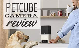 PetCam on kitchen counter with human (Caption: Petcube Camera Review)