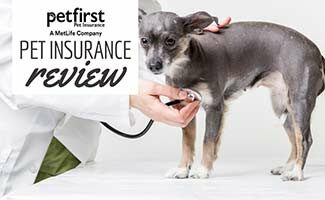 Dog with stethoscope at vet (Caption: PetFirst Pet Insurance Review)