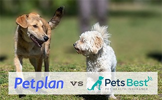 Two dogs running (caption: Petplan vs Pets Best logos)