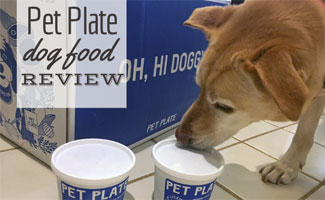 Bella licking Pet Plate container next to box (Caption: Pet Plate Dog Food Review)