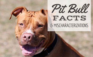 Pit Bull (caption: facts & mischaracterizations)