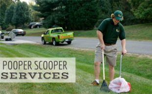 Pooper Scooper Service in yard