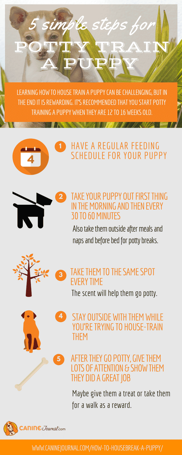 How to Potty Train a Puppy Infographic