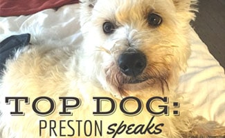 Get the Scoop in Our Top Dog Interview with Preston Speaks