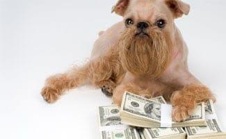 Schnauzer Dog laying on pile of money