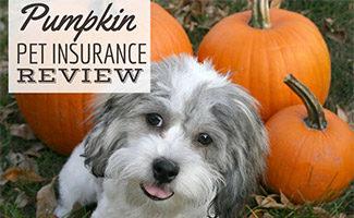 Dog with pumpkins (caption: Pumpkin Pet Insurance Review)