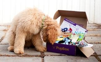 PupBox photo