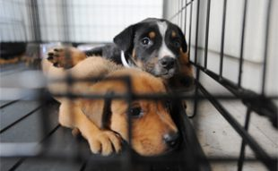 2 dogs in cage at shelter