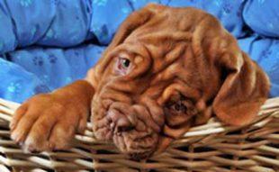 Puppy Bed