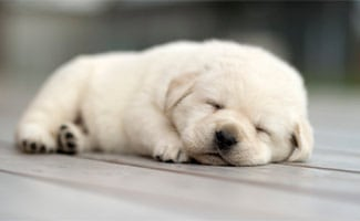 Small white puppy on ground dreaming