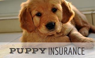 Do I Need Puppy Insurance?