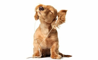 A puppy dog wearing earbuds and shaking its head with its eyes closed against a blank white background.