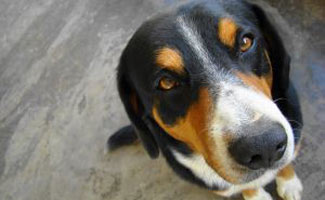 Common Puppy Mistakes What Owners Need To Know Caninejournal Com