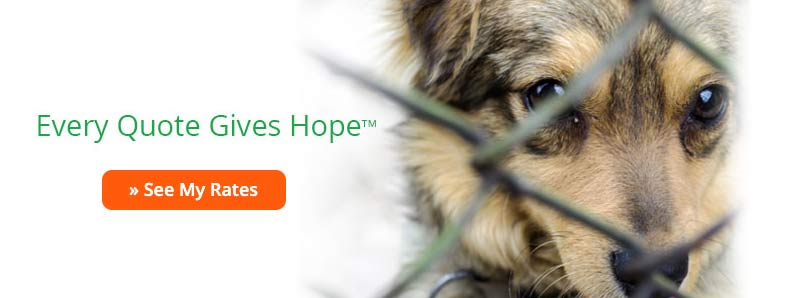 Every Quote Gives Hope Healthy Paws screenshot