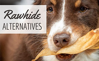 Dog chewing on bone (caption: Rawhide Alternatives)