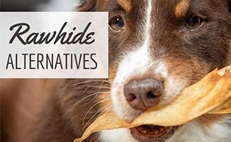 Dog chewing on bone (caption: Rawhide Alternatives)