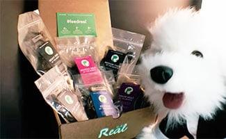 Real Dog Box with dog