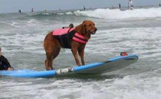 Ricochet surfing