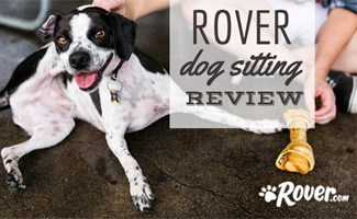 Pet sitter with dog: Rover dog sitting reviews