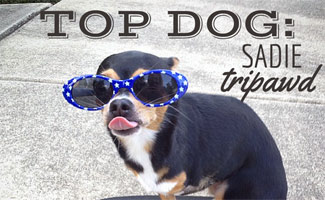 Top Dog Interview with Sadie Tripawd