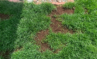 Scott's EZ Seed Dog Spot Repair in yard