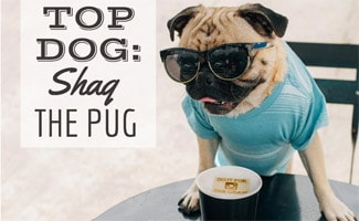 Shaq the Pug with coffee