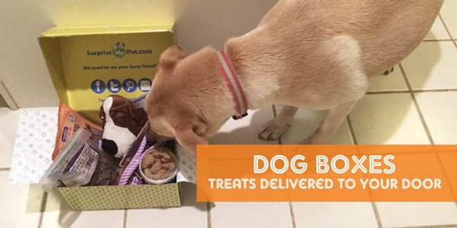 Dog Box Subscriptions: Treats Delivered To Your Door