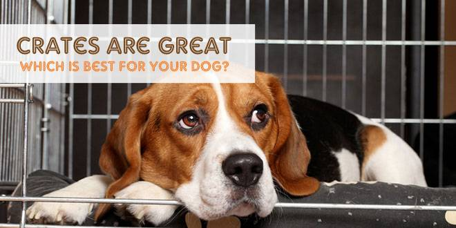 Crates are Great: Which is Best for Your Dog?