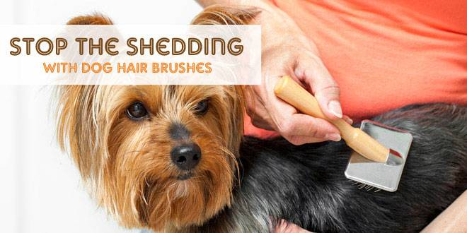 Stop the Shedding With Dog Hair Brushes