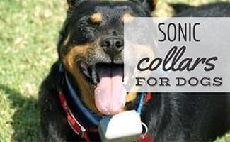Dog with sonic collar on neck (caption: Sonic Collars for Dogs)