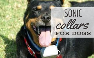 Rottweiler with sonic collar on neck (caption: Sonic Collars For Dogs)