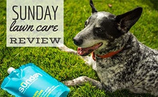 Dog sitting on lawn next to Sunday lawn care product (caption: Sunday Lawn Care Review)