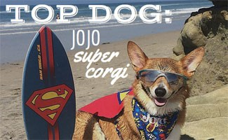 Top Dog Interview with Super Corgi Jojo with Surfboard