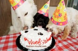 Three Dogs Eat Birthday Cake