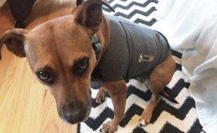 Lily in thunder jacket: Thunder Jacket for Dogs