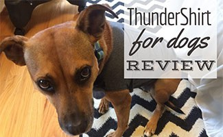 Dog with ThunderShirt on (caption: ThunderShirt For Dogs)