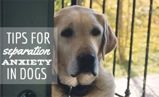 How to Deal with Separation Anxiety in Dogs?