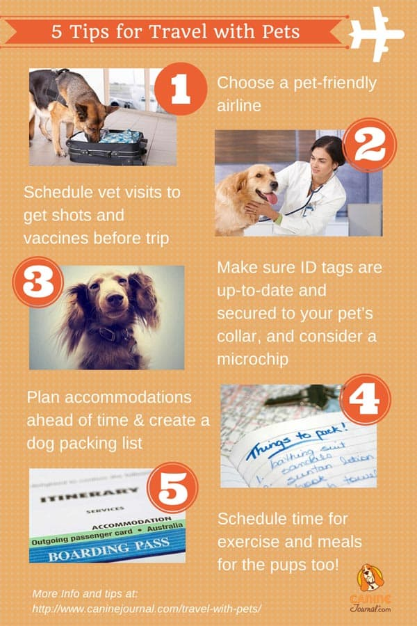 Traveling with pets infographic