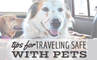 Tips for Safe Traveling with Dogs from Canine Journal