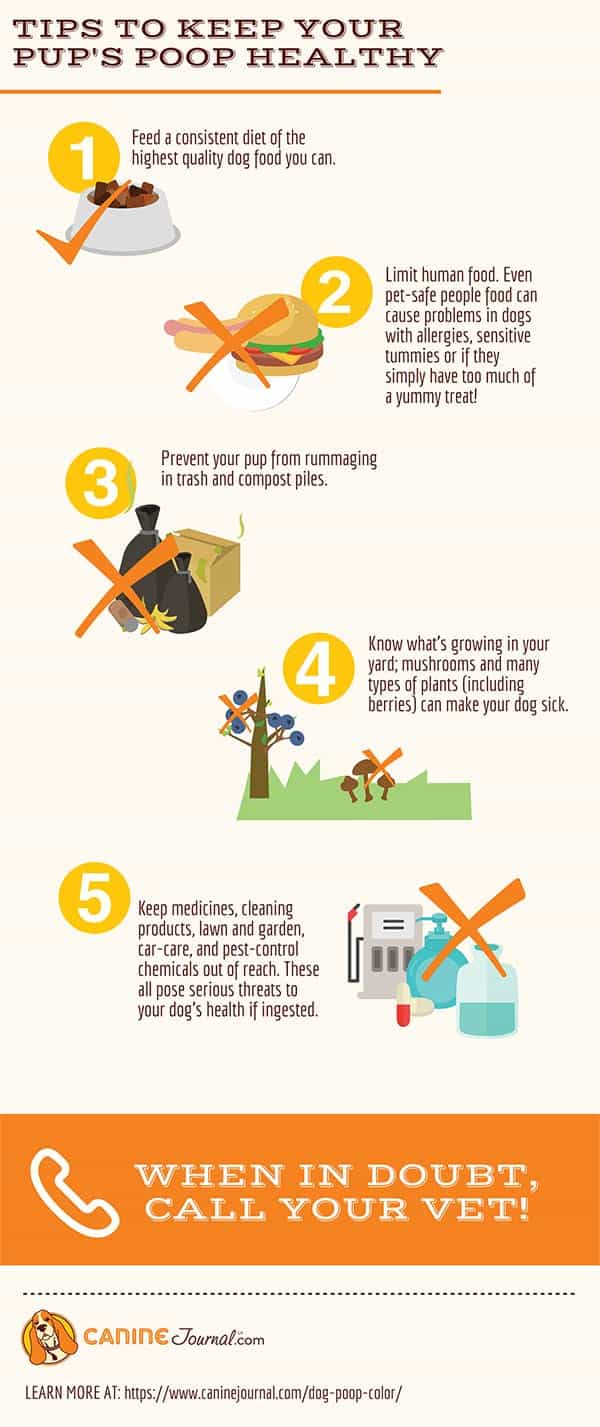 Tips To Keep Poop Healthy Infographic
