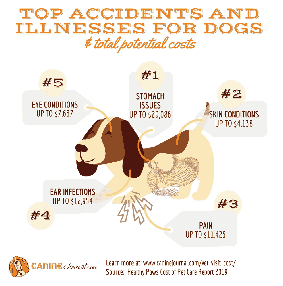 Top Dog Issues & Costs Infographic