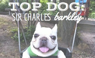 Sir Charles Barkley Dog