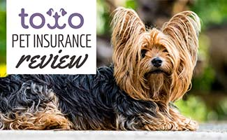 Terrier dog sitting (Caption: Toto Pet Insurance Reviews)