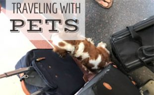Dog sitting next to luggage