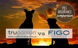 Two dogs sitting in sunset (Caption: Trupanion vs Figo logos Pet Insurance Comparison)