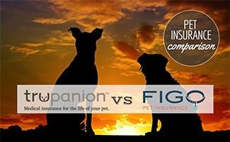 Two dogs sitting in sunset (Caption: Trupanion vs Figo logos; Pet Insurance Comparison)