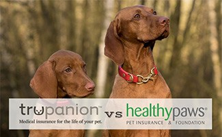 Two dogs sitting (Caption: Trupanion vs Healthy Paws logos)